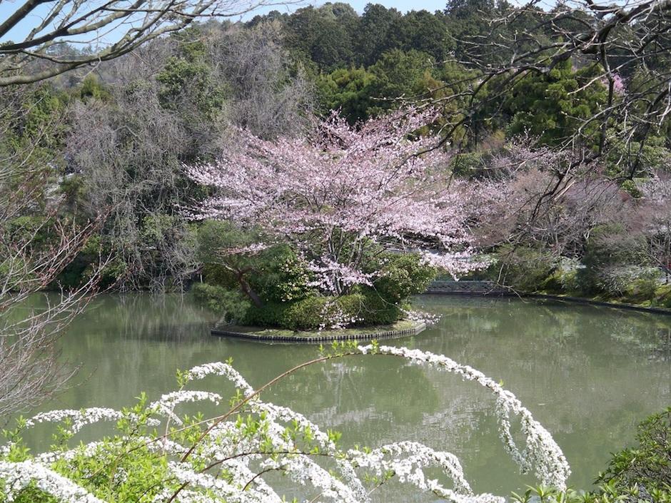 Kyoto Blossom gardens of Ryoanji