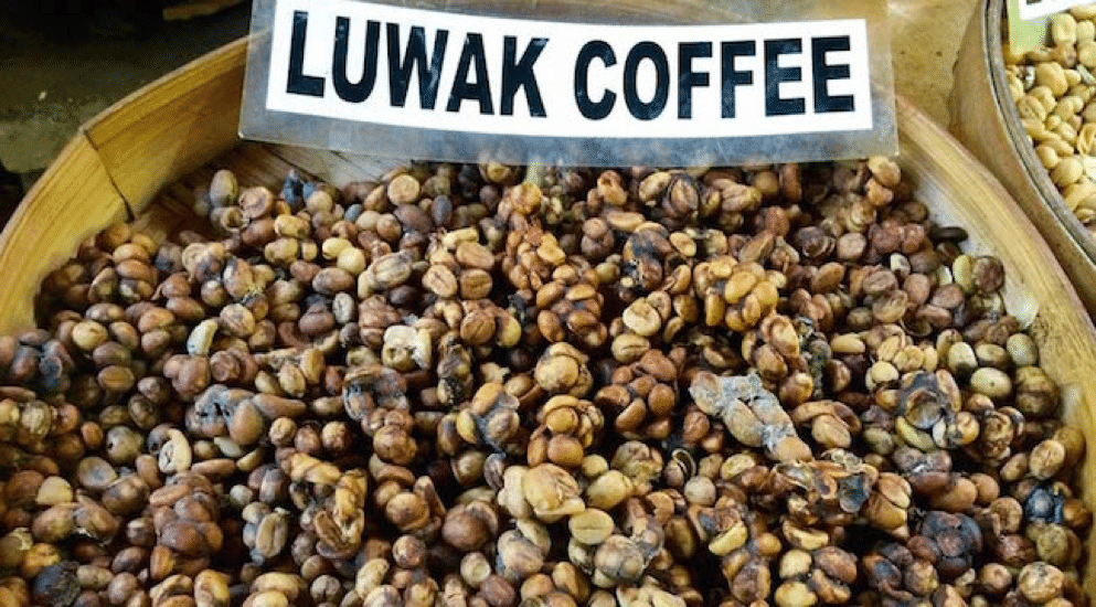 local coffee for muslim travelers in indonesia