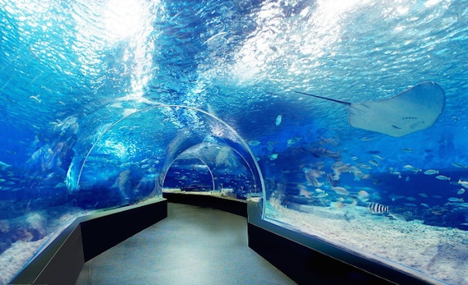 Best Aquarium and Marine Parks in Manila for muslims travelers